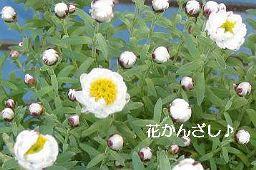 花かんざし1256.jpg